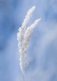 Rimfrost på gräs Arkivbilder