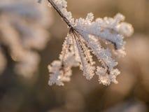 Rimfrost på gräs Royaltyfri Foto