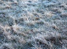 Rimfrost på gräset Arkivbilder