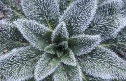 Rimfrost på leaves Royaltyfria Foton