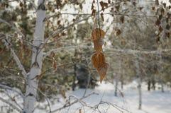 Rimfrost på leaves royaltyfri foto