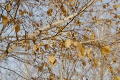 Rimfrost på leaves fotografering för bildbyråer
