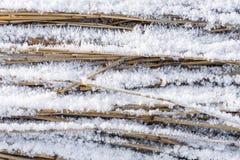 Rimfrost på rottingen Arkivfoton