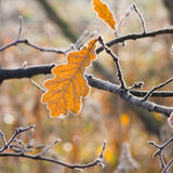 Rimfrost på sidor Royaltyfria Foton