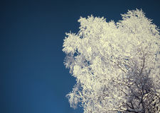 Rimfrost på träd Arkivfoton