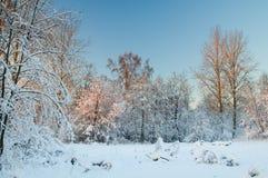 Rimfrost på träden Royaltyfri Bild