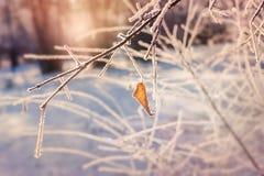 Rimfrost på trädet i vinterskog Royaltyfria Foton