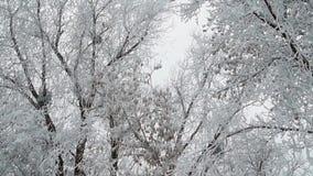 Rimfrost på trädfilialer lager videofilmer