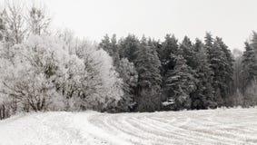Rimfrost på trees Royaltyfri Bild