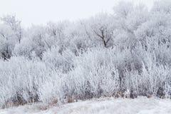 Rimfrost på trees Arkivfoto