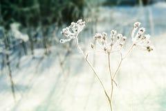 Rimfrost på växterna i vinterskog Arkivfoto
