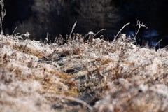 Rimfrost på gräs Royaltyfria Bilder