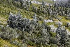 Rimfrostlandskapet av bergskedjan Arkivfoto