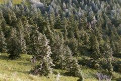 Rimfrostlandskapet av bergskedjan Arkivbild