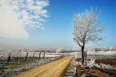 rimfrostliggande Fotografering för Bildbyråer