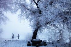 Rimfrostträd Arkivbild