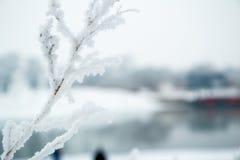 Rimfrostträd arkivfoto