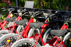 Rimini, bicycle rental Royalty Free Stock Image