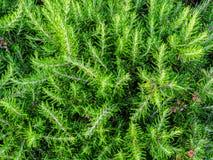 Rimini - grüne Hecke von immergrünen Büschen stockbilder