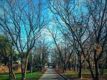 Rimini trädgård Arkivfoton