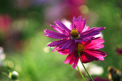 Rimlight de la flor Fotos de archivo