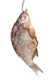 Rimmad fisk till hängt öl arkivfoto
