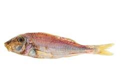 Rimmad och torkad fisk för röd multefiskar Arkivbild