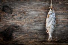 Rimmad torkad fisk Royaltyfria Foton