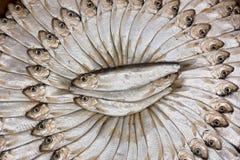 rimmade sardines Fotografering för Bildbyråer