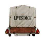 Rimorchio del bestiame Immagini Stock Libere da Diritti