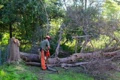 Rimozione dell'albero Immagini Stock