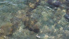 Rimpelingen op de oppervlakte van het duidelijke Adriatische overzees stock video