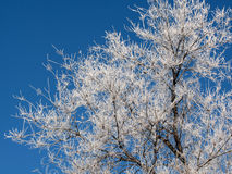 Rimy Baum Stockbilder