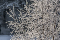 Rimy tree branches Stock Images