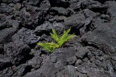 Rinascita di Hawaian Immagini Stock
