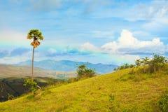 Rinca island. royalty free stock photo