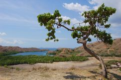 Rinca island landscape view Royalty Free Stock Photo
