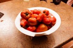 Rinced-Tomaten stockfoto