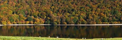 Rinchiuda il panorama di colori dell'albero di autunno del bacino idrico di Y Garreg Fotografie Stock