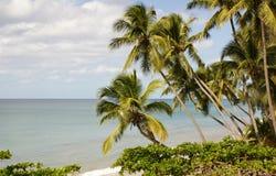 Rincon Beach Stock Image