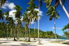 Playa Rincon beach on Dominican Republic. The Rincon beach on Dominican Republic Stock Images