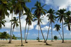 Playa Rincon beach on Dominican Republic Stock Photos