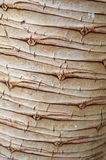 Rind. Brown rind close up - background royalty free stock image