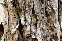 Rind tree. A different pattern of trees Royalty Free Stock Photos
