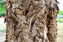 Rind tree. A different pattern of trees Royalty Free Stock Photography