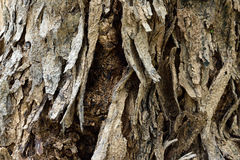 Rind tree. A different pattern of trees Stock Photos