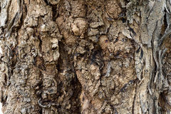 Rind tree. A different pattern of trees Stock Image