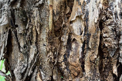 Rind tree. A different pattern of trees Royalty Free Stock Image