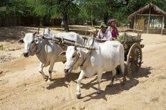 Rind-Wagen auf Myanmar Stockbild