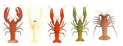 Rinda de sistema crustáceo ilustración del vector